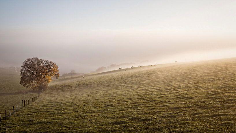 Kühe im Nebel von Rob Boon