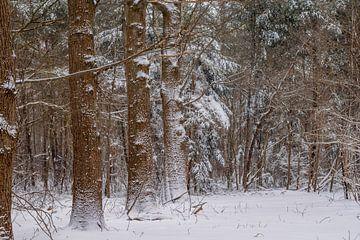 Eikenlaantje in de sneeuw van Iris Brummelman