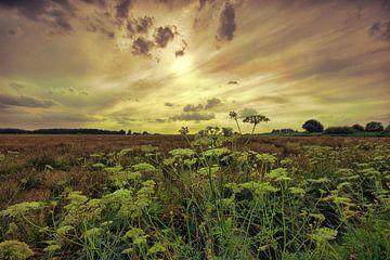 Sonnenuntergang Den Haag Beemdenbos von Cees van Gastel