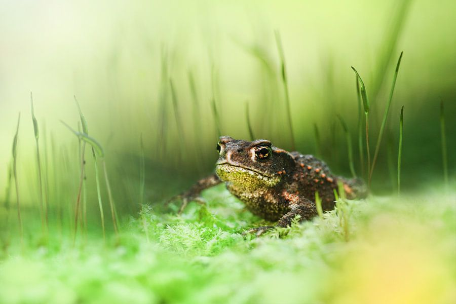 Between the high moss