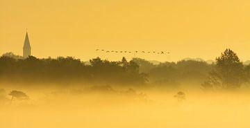 Overvliegende ganzen in mistig landschap von Remco Van Daalen