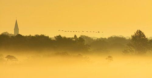 Overvliegende ganzen in mistig landschap