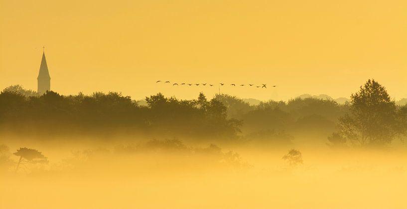 Overvliegende ganzen in mistig landschap van Remco Van Daalen