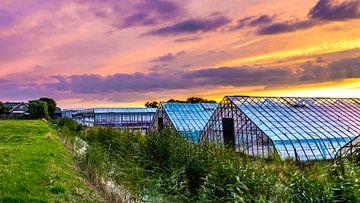 Glastuinbouw bij zonsondergang  von Marco Schep