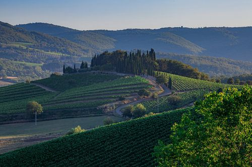 Wijnranken in Toscane