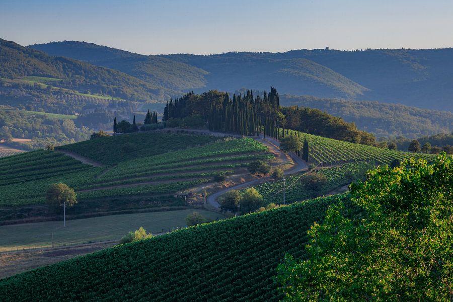 Wijnranken in Toscane van Marc Vermeulen