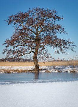 Baum im Winter von Thijs Friederich