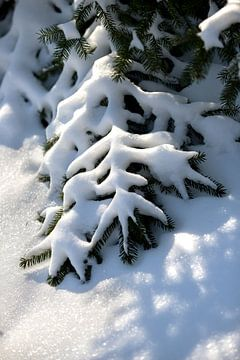 Verschneite Nadelbäume in einer ländlichen Naturlandschaft | Fine Art Photo Print | Poster von Karijn Seldam