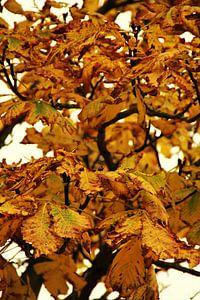 fleurige herfstkleuren