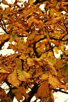 fleurige herfstkleuren van Marije Zwart