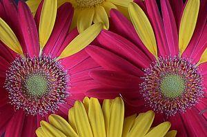 Blumenaugen