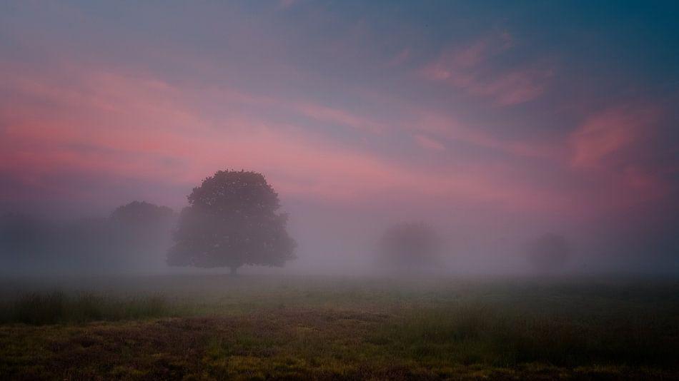 Mistig kleurrijke sfeeropname zonsopkomst