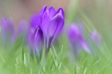 Frühling von Ad Jekel