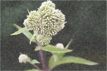 Bloemen 11 sur Miriam Duda