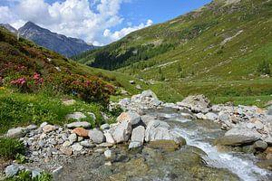 Prairies alpines, rivière et azalées au Splügenpass Suisse sur My Footprints