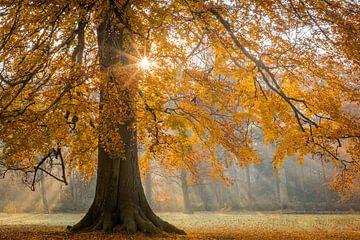 Herfstkleuren in het bos van Original Mostert Photography