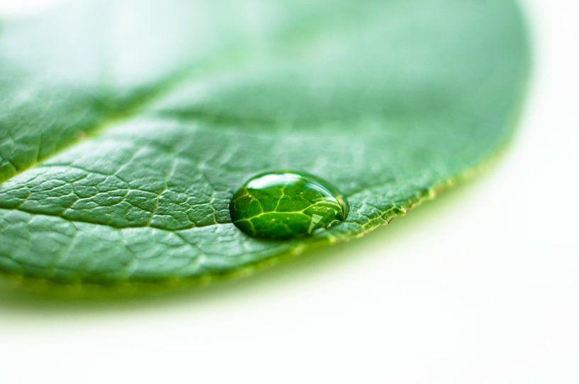 Waterdruppel op een groene blad van Ricardo Bouman