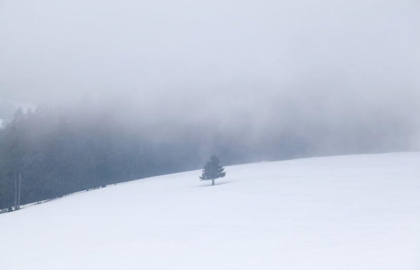 single spruce tree on snow hill van Olha Rohulya