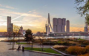 L'automne à Rotterdam. sur Arisca van 't Hof