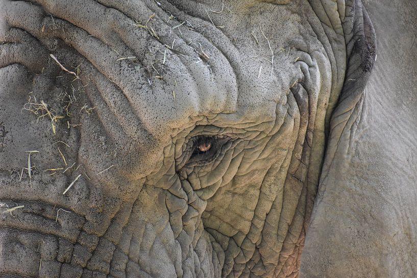 Olifant close up van Natascha Nabuurs