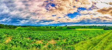 Wijngaard panorama van Mi Vidas Fotodesing