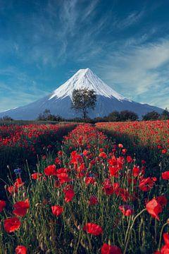 Mount Fuji with friends von Alexander Dorn