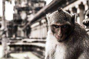 Een boze aap voor een tempel in Cambodja van