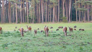 Herten, Zwijnen van Gijs van Veldhuizen