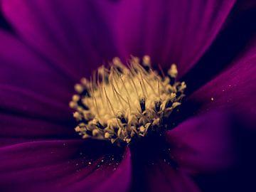 Bordeauxrote Blume Nahaufnahme Makro-Fotografie von Art By Dominic