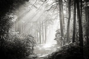 Into the Forest - Nr. 2 von Dorit Fuhg