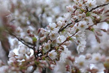 Blütenzweige von Thomas Jäger