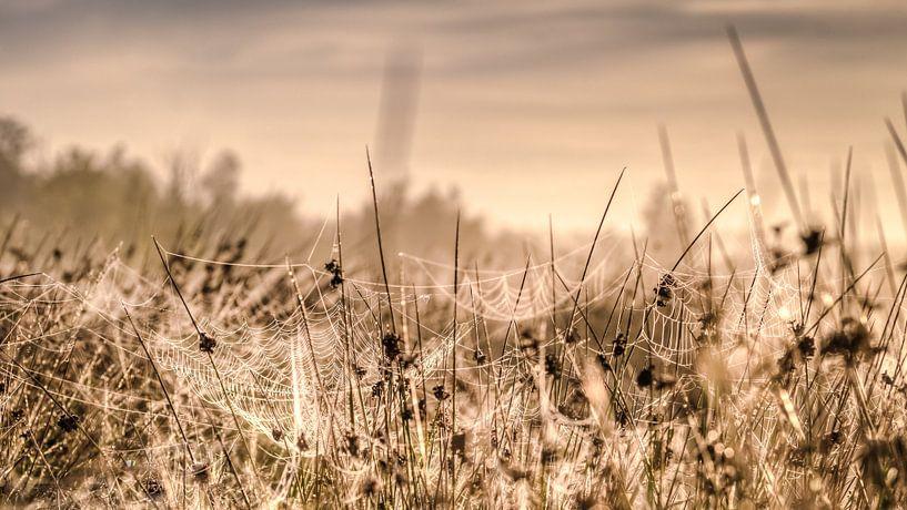 Graspollen in waterrijk vennengebied met spinnenwebben in deochtendzon van Fotografiecor .nl