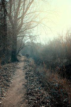 Waldweg im Morgenlicht von Carin Klabbers