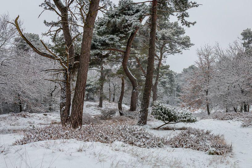 Winter Trees van William Mevissen