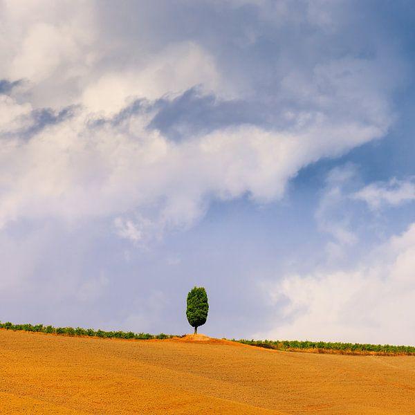 A single Cypress tree in Le Crete Senesi in the Tuscany van Henk Meijer Photography