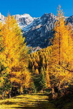 Golden Avenue in den Bergen von Coen Weesjes