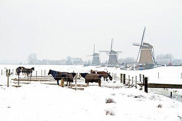 Paarden in de winter op het platteland van Nisangha Masselink