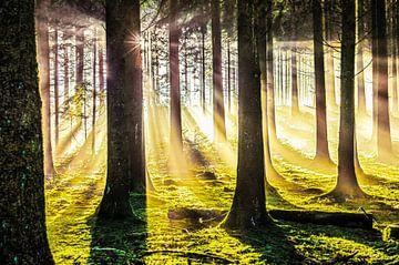 Herbstwald in der Magie des Lichts