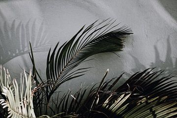 Curaçao - Palmblad van Rowenda Hulsebos