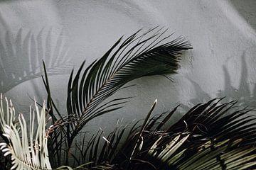 Curacao - Palmenblatt von Rowenda Hulsebos