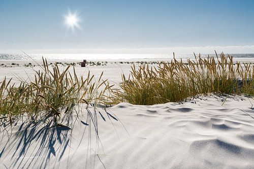 Nordsee Dünenzauber