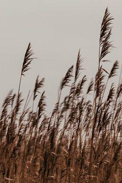Speels riet. Fine art fotografie. Foto in kleur. Aardetinten. van Quinten van Ooijen