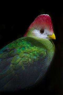 Tropische vogel in de Vogelkelder Avonturia, Den Haag. van Aukelien Minnema