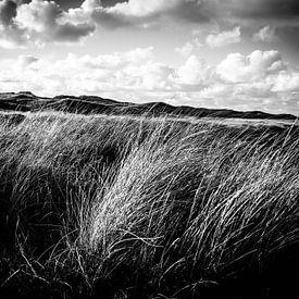 Wuivend duingras in de duinen in Zwart-wit   Callantsoog, Nederland   Natuurfotografie van Diana van Neck Photography