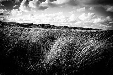 Wogendes Dünengras in den Dünen | Callantsoog, Niederlande | Naturfotografie von Diana van Neck Photography