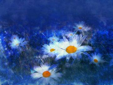 Madeliefjes met blauwe achtergrond van Claudia Gründler