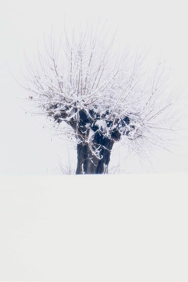 Sneeuw beknot...