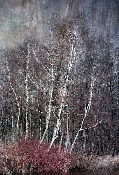 Berkenbomen in de winter van Rietje Bulthuis