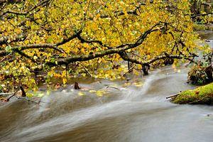 Water bos Leuvenum van