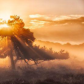 Zonsopkomst in de mist  met prachtig licht op de heide bij  Oudemolen, Drenthe, Nederland van Bas Meelker